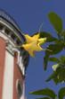 canvas print picture - Goldene Engelstrompete im Botanischen Garten, Wuppertal