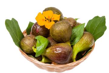 Figs in studio