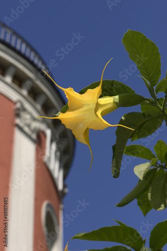 canvas print picture Goldene Engelstrompete im Botanischen Garten, Wuppertal