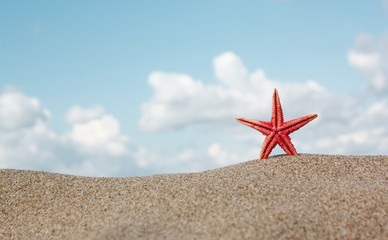 Red starfish on sand