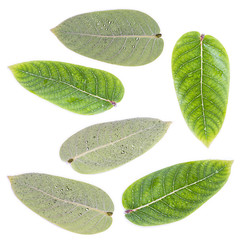 Green leaves set isolated