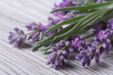 Fototapety bouquet of fragrant lavender flowers