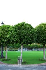 Beautiful trees in park