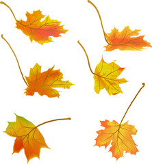 illustration with six autumn maple leaves