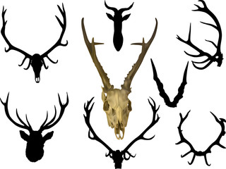 collection of eight antler and horns