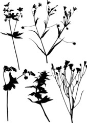 five black wild flowers on white illustration