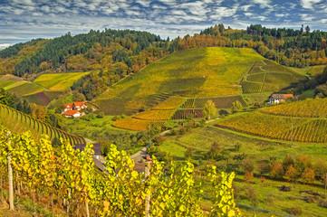 Weinberge im Herbst, Schwarzwald, Deutschland