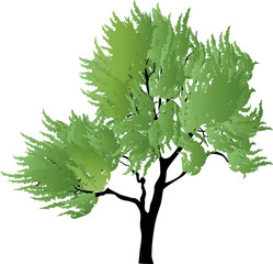light green isolated tree illustration