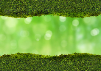 dark moss strips on green background