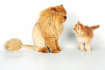 Katzenpapa und Katzenkind