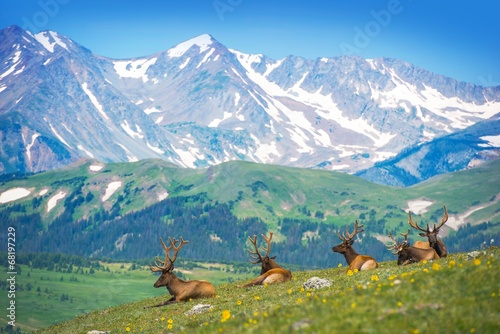 Deurstickers Hert North American Elks