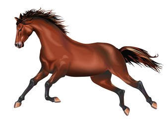 Galloping Horse Isolated