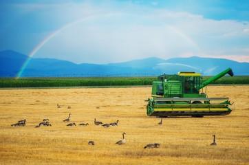 Colorado Harvesting