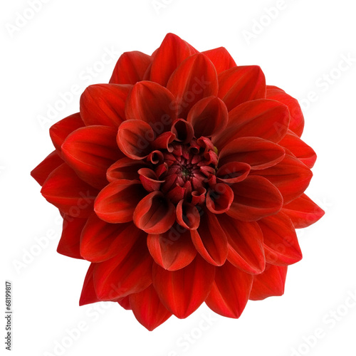 Fotobehang Dahlia Red dahlia isolated on white background