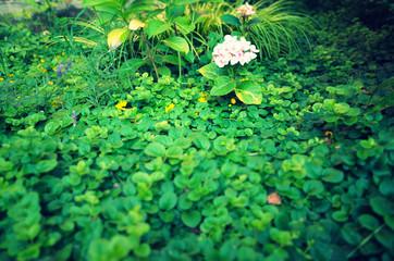Hortensia inside shrubs