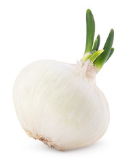 Onion vegetable bulb with fresh green sprout isolated on white