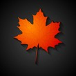 Red maple leaf. Autumn background