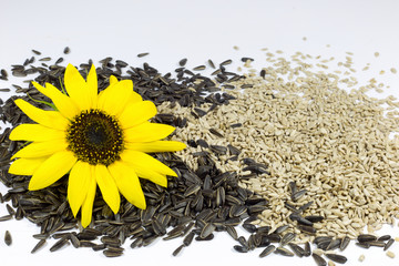 Sunflower and Roasted Sunflower Seeds on White Background