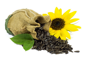 Sunflower and Sunflower Seeds in Jute Bag with Green Leaves
