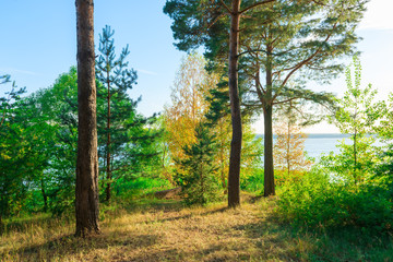 Evergreens on the lakeside beautiful landscape