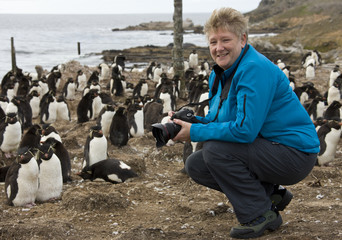 Tourist in a Rockhopper Penguin Colony in the Falkland Islands