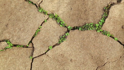 Cracked soil during a drought. Young sprout. Bad ecology
