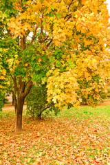 Beautiful autumn landscape in warm colors