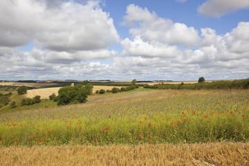 scenic wildflower meadow