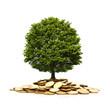 Baum auf Münzen