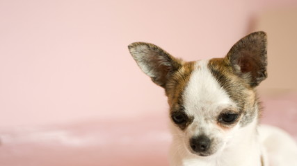 small dog looking