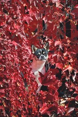 Cane fa capolino tra le foglie