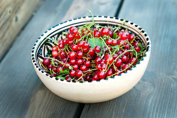 fresh red currants in a cup