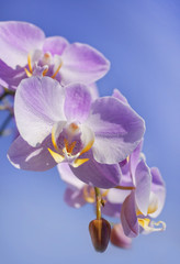 gentle purple orchid with unusual core