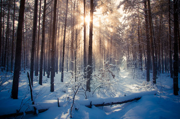 Winter landscape, trees covered in snow