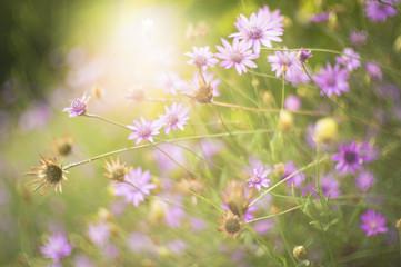 Delicate wild beauty