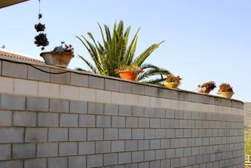 Plantas encima de la pared