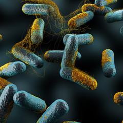 Clostridium Perfringens Bacteria