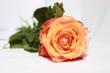 canvas print picture - rosa orange Rose 02