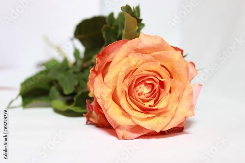 canvas print picture rosa orange Rose 02