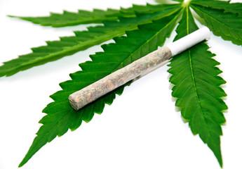 Marijuana joint on leaf