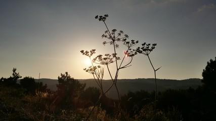 Sunset at field, Crimea