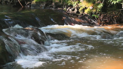 ruisseau de forêt contrasté kazy