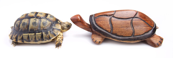 wooden and real tortoise