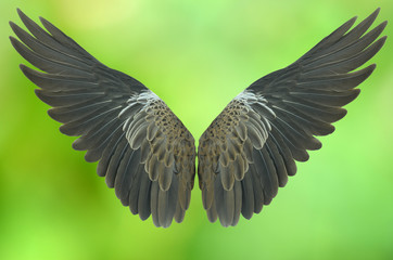 wing isolated on green background