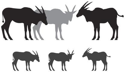 Common eland antelope silhouettes