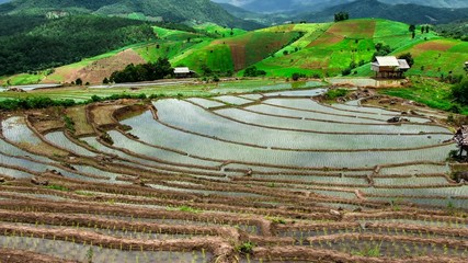 Hd Time Lapse Pabongpiang Rice Field