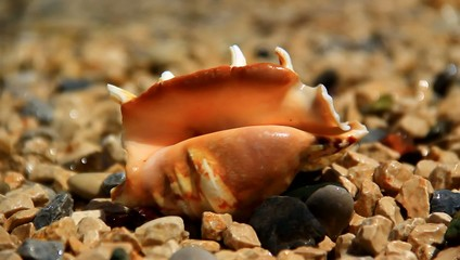Small shell on the rocks