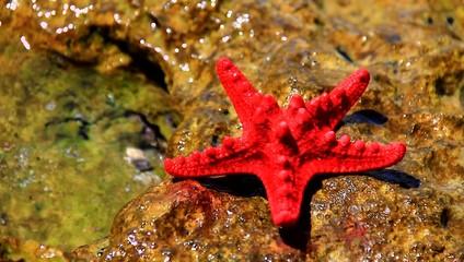 Small starfish on the rocks