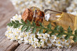 Постер, плакат: extract of yarrow in a bottle with flowers on the table
