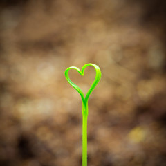 Sprout In The Shape Heart